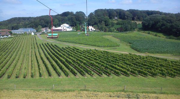 Wijnvelden Rodeberg
